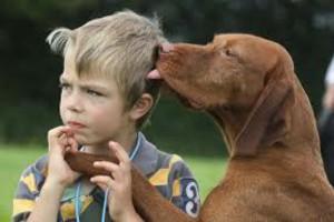 Οι σκύλοι βελτιώνουν την κοινωνική μας ζωή, σύμφωνα με πρόσφατη έρευνα