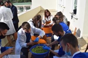 Μαθητές Σχολείου της Μητρόπολης Αργυροκάστρου μάζεψαν και ετοίμασαν ελιές…