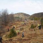 Διακόσια πεύκα φύτεψαν σε καμένη περιοχή νέοι της Εκκλησίας της Αλβανίας