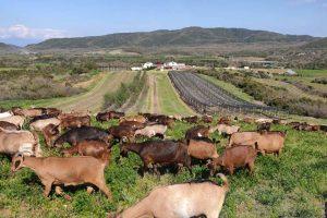 Περίεργες «μεθοδεύσεις» της Διεύθυνσης Κτηνιατρικής της Περιφέρειας Κεντρικής Μακεδονίας στο Χωράφι του Γέροντα στη Βόλβη